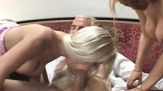 Busty babes love the taste of pussy, cock, and going ass to mouth