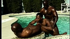 The pool is full of dark chocolate with this trio of gay studs fucking